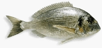 The sea bream